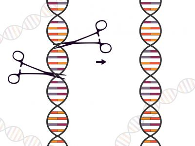 Image of DNA editing